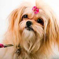 veterinaria Olazabal peluqueria canina